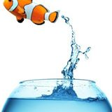 Yet a New Customer- Welcome Tideline Aquatics